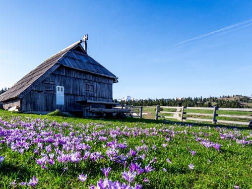 Una baita nella Mala Planina, in primavera