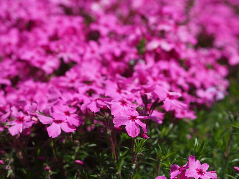 I meravigliosi colori della primavera