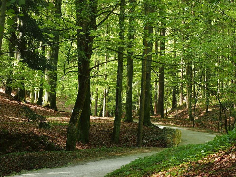 La foresta all'interno del parco - Arboretum Volčji Potok