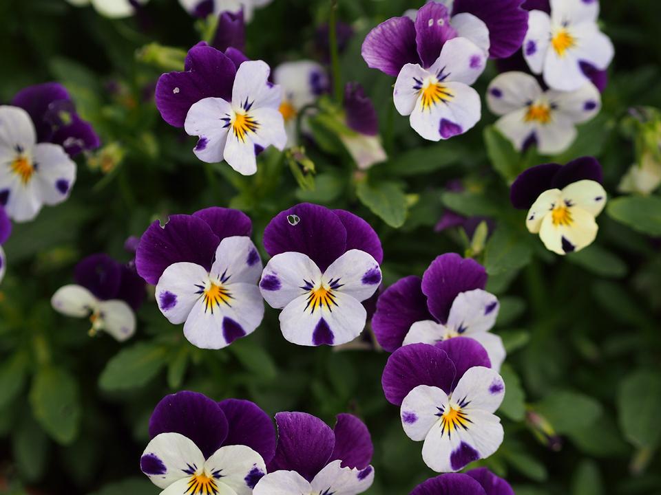 Fiori, fiori e ancora fiori!