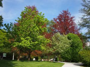 i magnifici alberi dell'Arboretum