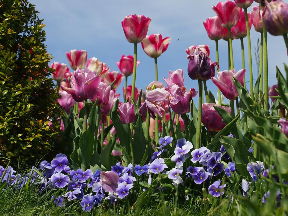 Tulipani e non solo! - Arboretum Volčji Potok
