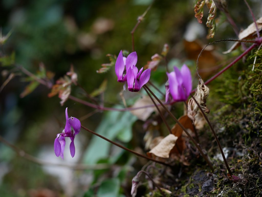 I bellissimi fiori del sottobosco
