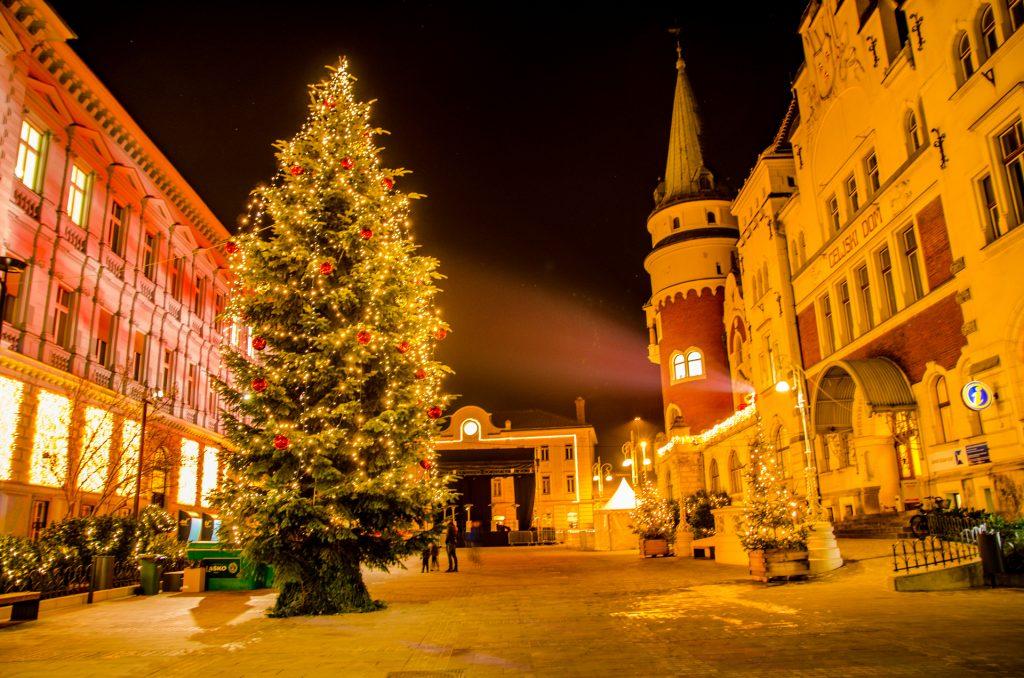 Un grande albero e un'atmosfera magica nel centro di Celje