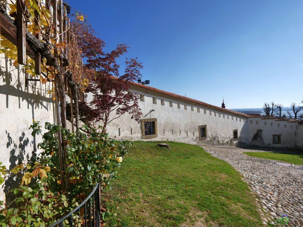 L'antica vite sul castello di Ptuj