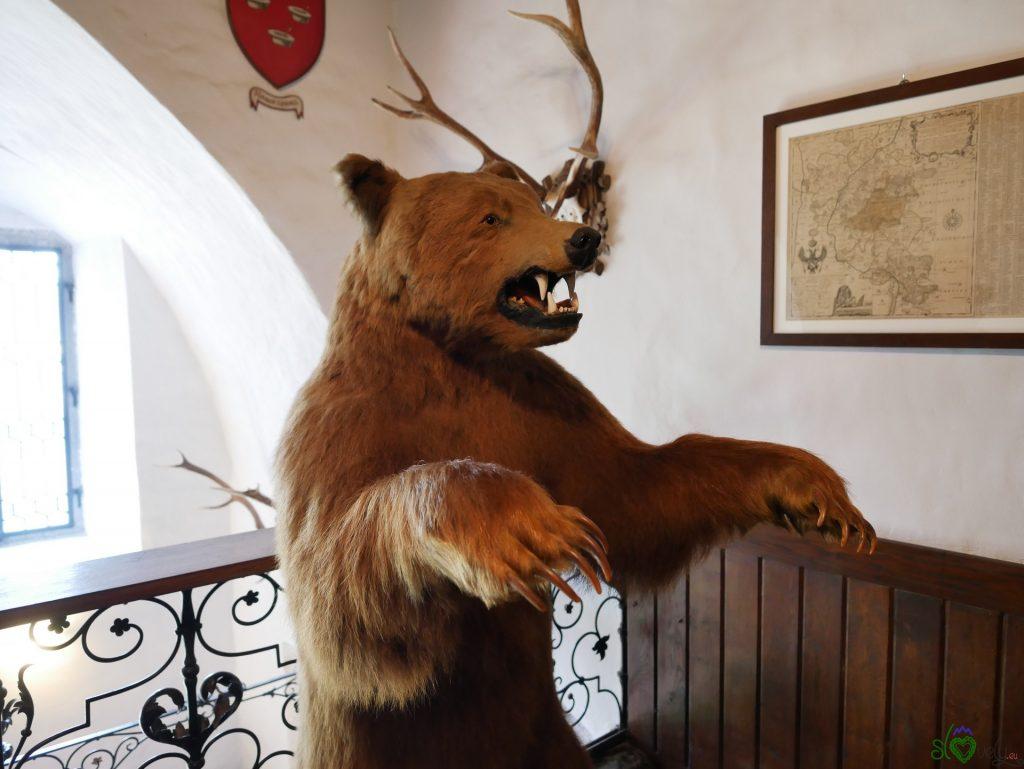 L'orso imbalsamato all'interno del castello