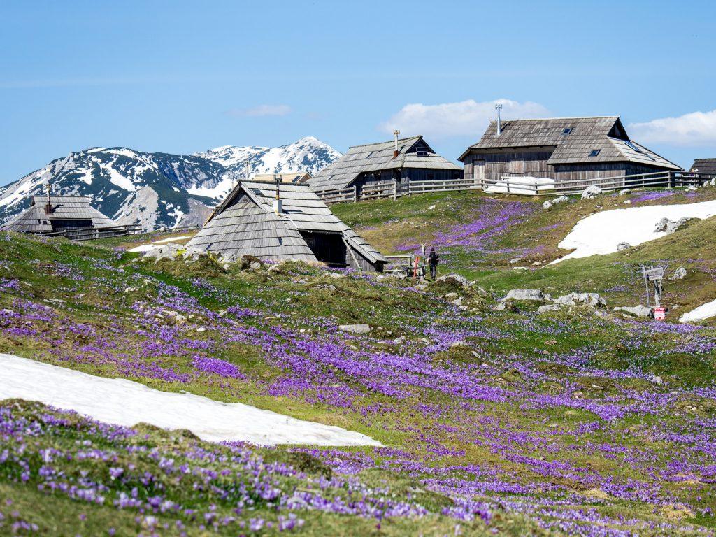 Il villaggio dei pastori in primavera