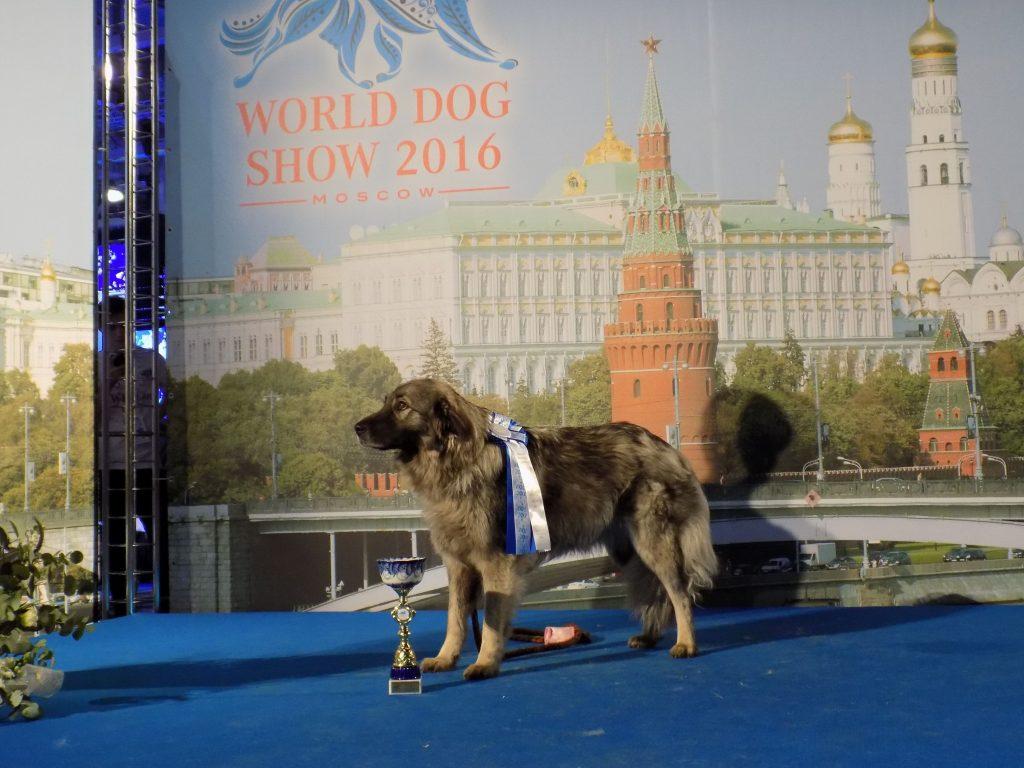 La splendida Mili premiata campionessa mondiale a Mosca