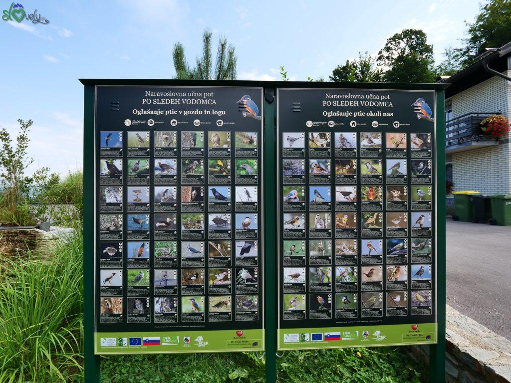 Il tabellone con tutti gli uccelli dell'oasi e i loro versi. Cerovo