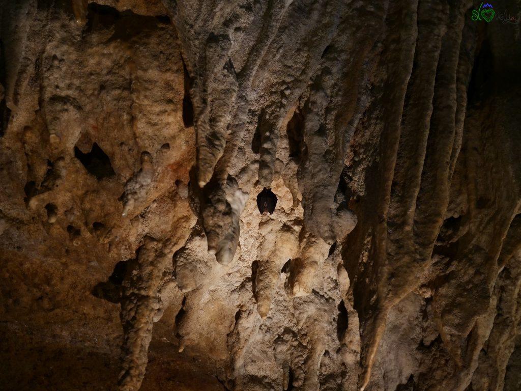 Uno dei simpatici pipistrelli che vivino nella grotta.