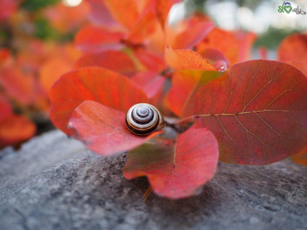 Pietra, foglie rosse e una chiocciola carsolina.