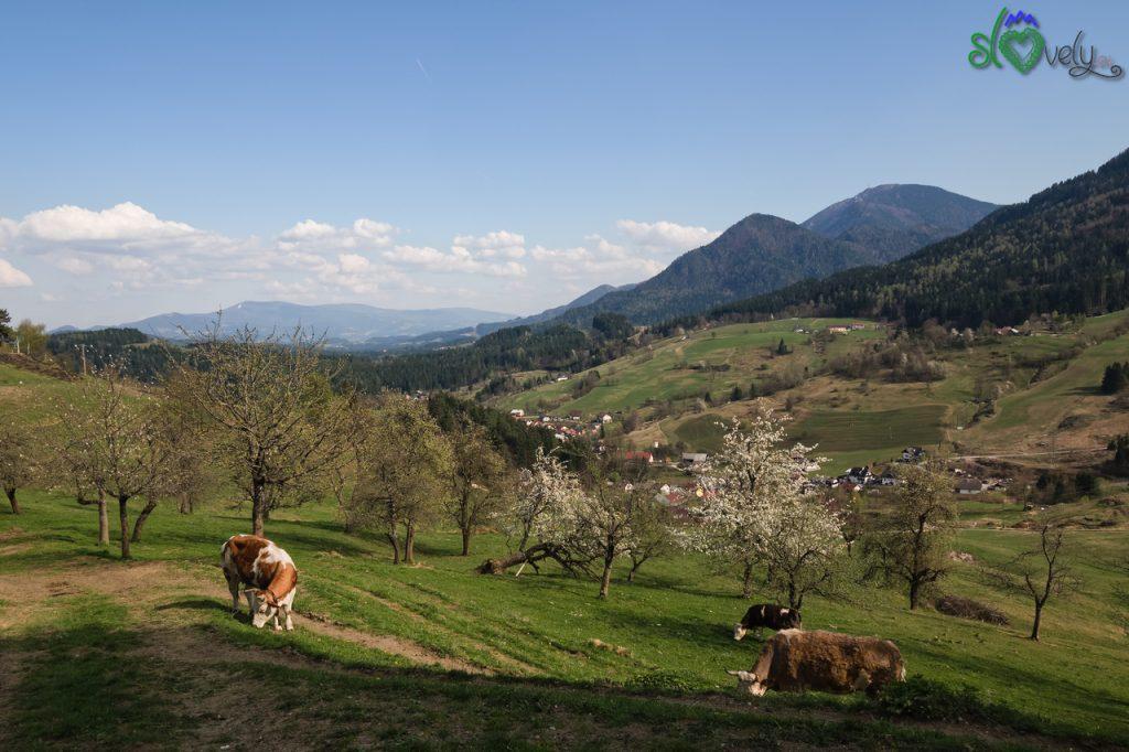 Il paesaggio bucolico della Koroška a Leše.