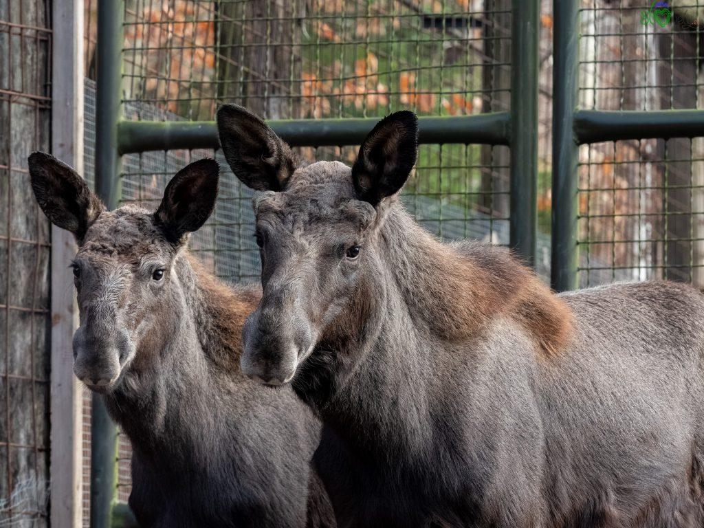 Zoo di Lubiana: un mondo da scoprire, anche in inverno 1