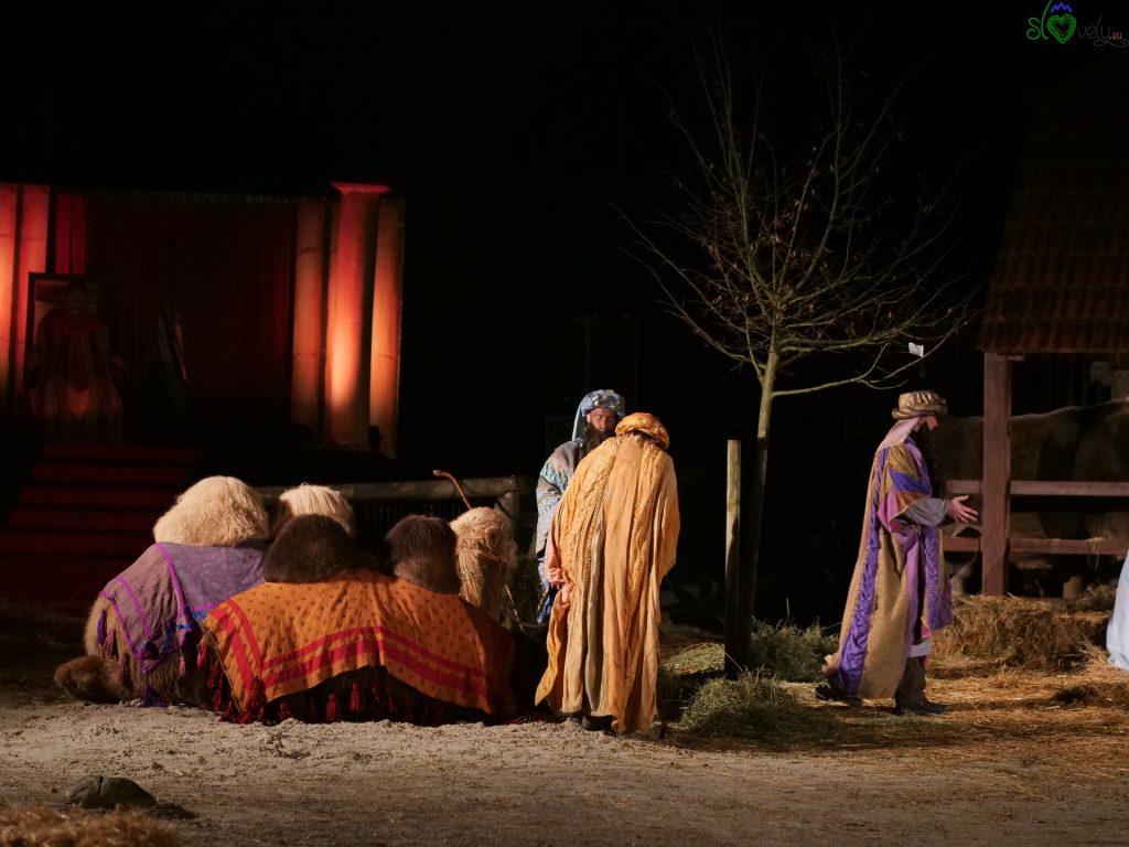 I Re Magi con i cammelli. - Zoo Ljubljana
