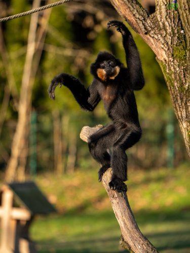 Zoo di Lubiana: un mondo da scoprire, anche in inverno 4