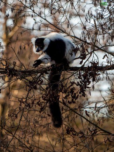Zoo di Lubiana: un mondo da scoprire, anche in inverno 5