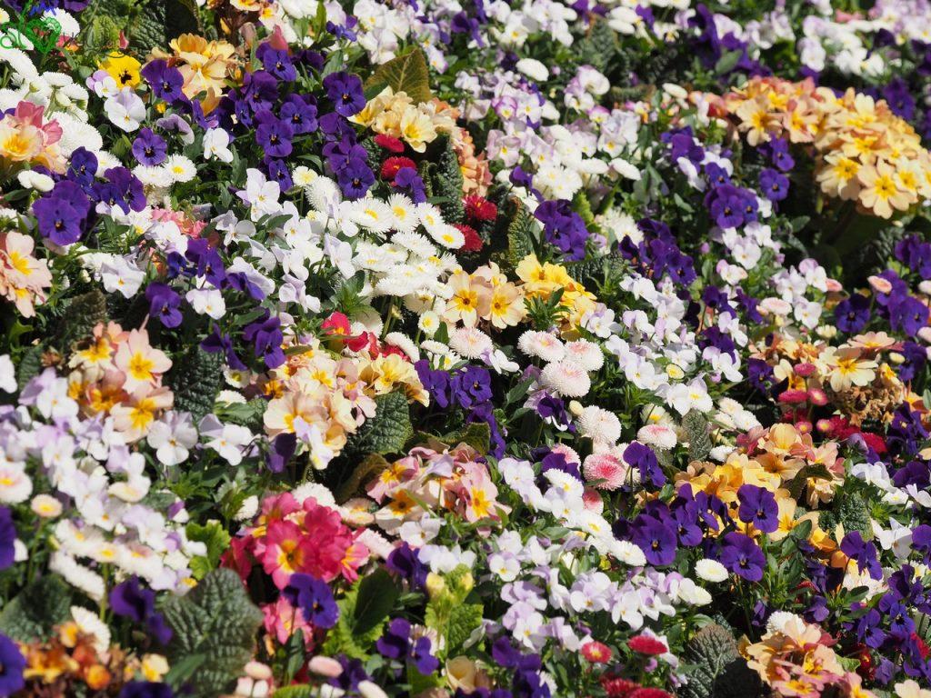 Benvenuti al Mozirski gaj, il regno dei fiori!