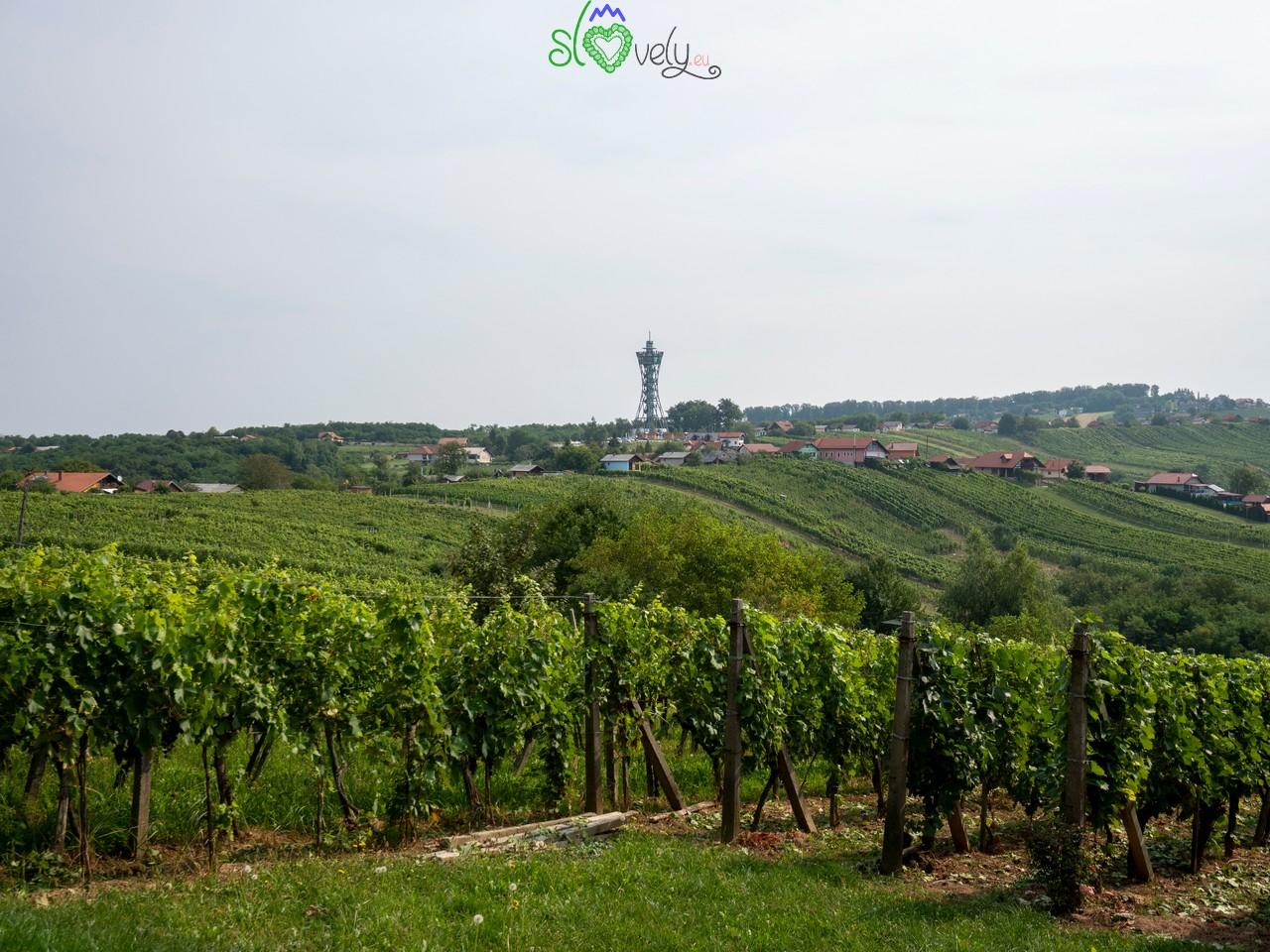 Lo splendido panorama dei vigneti delle Lendavske Gorice, dominate dal Vinarium.