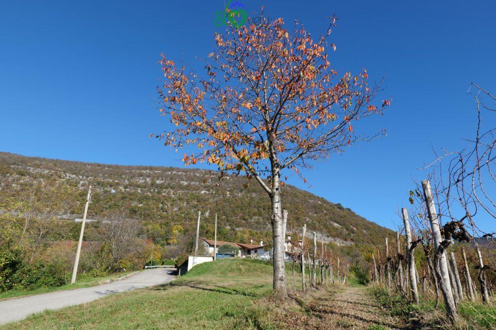 Il monte Sabotino in autunno, visto da San Mauro/Štmaver.