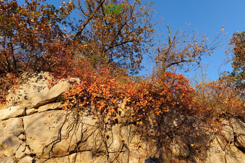 In autunno il Sabotino si tinge di rosso!