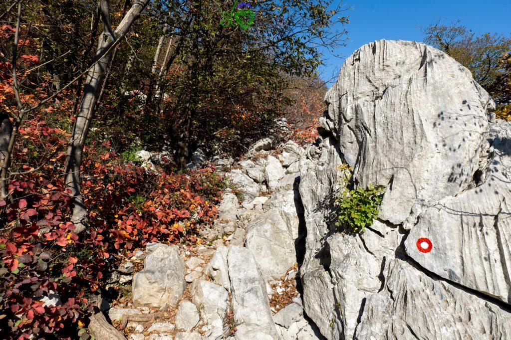 Il sentiero si fa più ripido tra le rocce carsiche.
