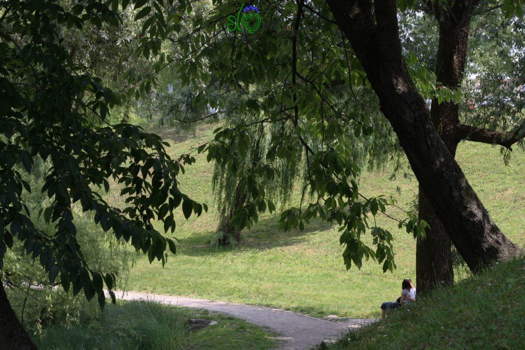 Borov gozdiček, il boschetto dei pini nel cuore di Nova Gorica.