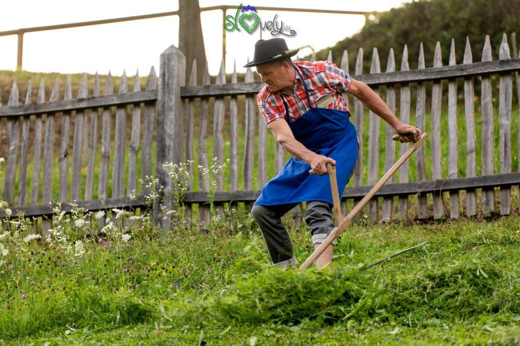 La falciatura dell'erba.