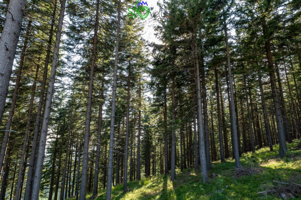 La fita foresta del Pohorje di Kope.