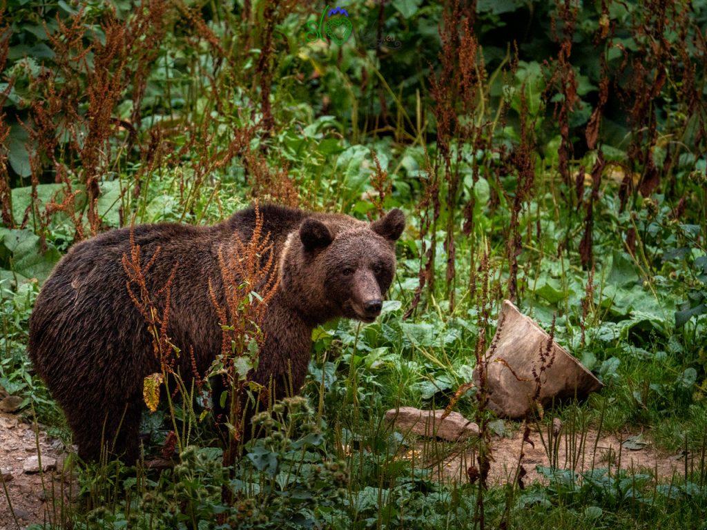 Il nostro orso in posa per noi!