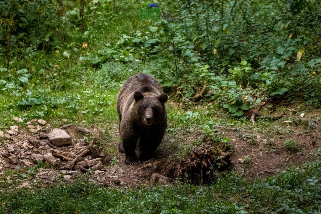Il nostro orso si sente osservato!